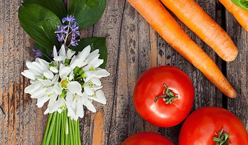 Herstellung und Qualitätssicherung eines Premium-Probiotikums